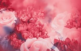 Картинка листья, цветы, розовая, розы, лепестки, бутоны, цветение