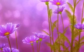 Обои листья, цветы, green, красота, весна, розовые, Flowers