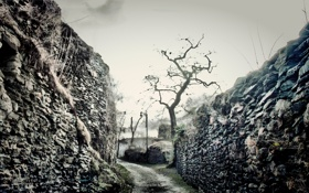 Обои дорога, деревья, ветки, камни, фото, фон, обои