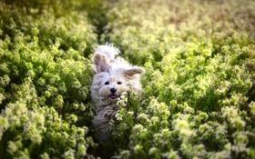 Обои поле, собака, цветы