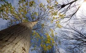 Картинка осень, небо, листья, облака, ветки, дерево, ствол
