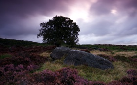 Картинка поле, пейзаж, ночь, дерево, камень