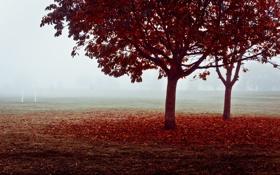 Картинка поле, осень, туман, ворота