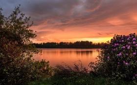 Обои закат, озеро, Шотландия, кусты, Scotland, рододендроны, водохранилище Баркрейгс