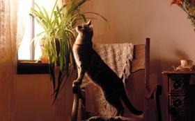 Обои кошка, кот, комната