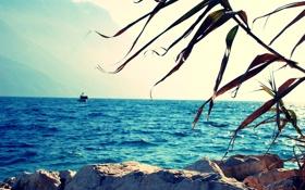 Обои море, пейзаж, горы, природа, океан, ветка, даль