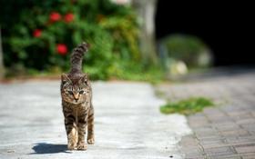 Картинка кошка, улица, прогулка