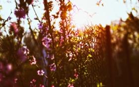 Обои макро, закат, цветы, природа, тепло, весна, май