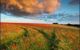 Картинка поле, маки, вечер, облако