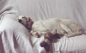 Картинка дом, уют, собака