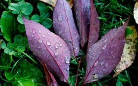 Обои зелень, осень, трава, листья, капли, макро, природа
