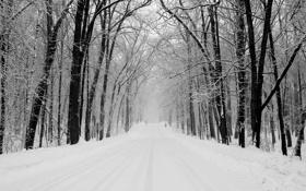 Обои зима, дорога, лес, снег, деревья