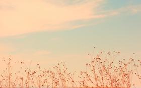 Обои небо, облака, растения, нежно