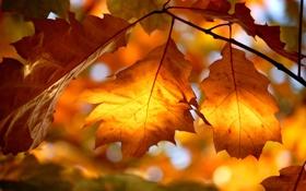 Обои природа, осень, свет, листва