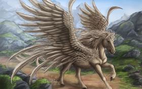 Обои скалы, дорога, крылья, перья, конь, пегас