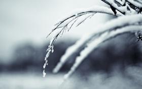 Картинка снег, ветка, зама