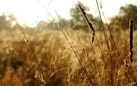 Обои трава, роса, утро, Осень