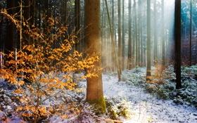 Картинка зима, осень, лес, свет, природа