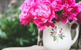 Обои пионы, лепестки, цветы