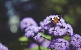 Картинка цветок, бабочка, крылья, насекомое