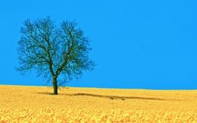 Обои поле, небо, природа, дерево, тень, весна, рапс