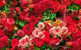 Картинка розы, каллы, георгины, бегонии, целозия