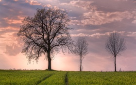 Обои облака, поле, небо, деревья, весна
