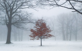 Картинка деревья, туман, парк