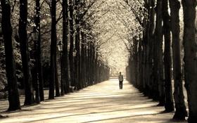 Обои парк, мужчина, аллея, Trees, People and Scenery, Path, Sepia