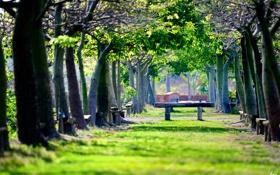 Обои зелень, парк, скамейки, лавочки