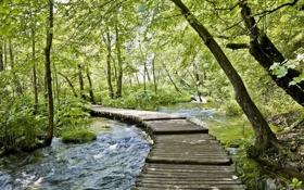 Обои вода, мост, природа, ручей