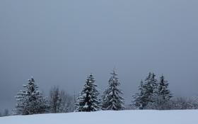 Обои зима, пейзаж, природа, ёлки