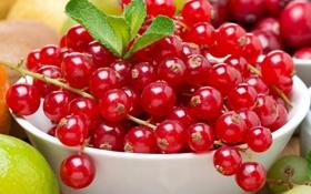 Обои ягоды, смородина, красная смородина, кислятина