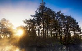Обои природа, лес, река, свет, пейзаж