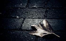 Картинка асфальт, макро, лист, темный фон, одиночество, земля, плитка