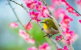 Обои сад, птица, ведка, клюв, цветы