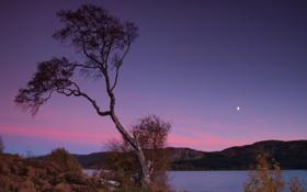 Обои небо, дерево, луна, вечер