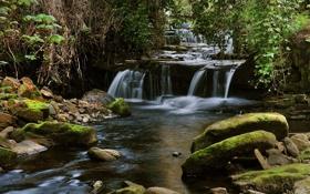 Обои Листья, Камни, Лес, Деревья, Поток, Природа, Ветки