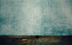 Картинка стена, минимализм, мышь, пол