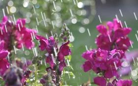 Обои солнце, цветы, блики, дождь, весна