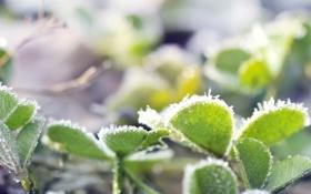 Картинка холод, иней, свет, растение, кристаллы, листики