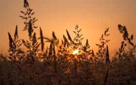 Обои закат, луг, травинки