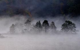Картинка осень, лес, туман, озеро