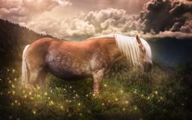 Обои лето, природа, конь