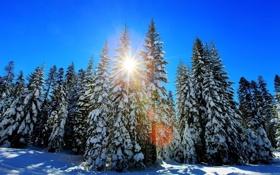 Обои зима, лес, солнце, деревья, елки
