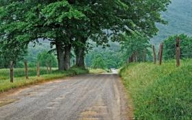 Картинка дорога, трава, деревья, природа, забор, ограда, лужи