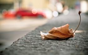Обои макро, лист, улица
