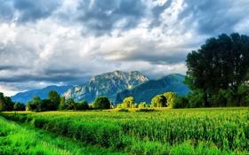 Обои горы, зелень, трава, красота