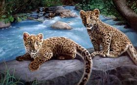 Обои камни, Река, котята, леопард