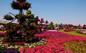 Обои цветы, дизайн, парк, газон, дорожки, сад, Dubai